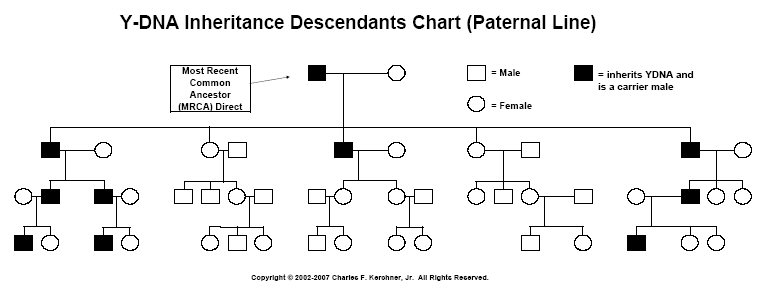 [Y-DNA Inheritance Chart]