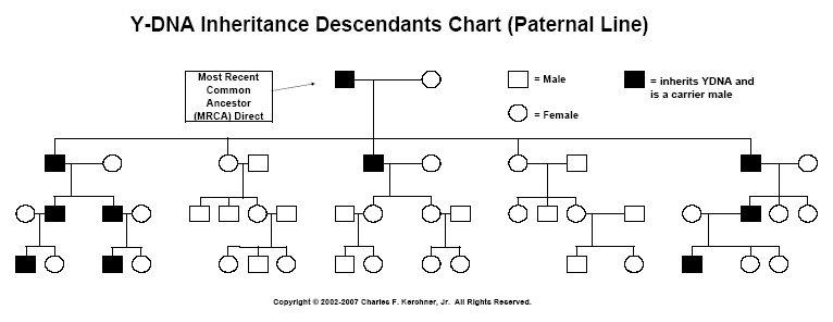 Y Dna Inheritance Chart